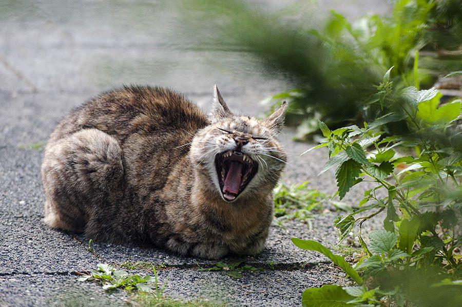 She's a cat | Foto © Henk Beenen